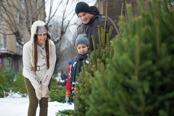 Young family choosing Cristmass tree