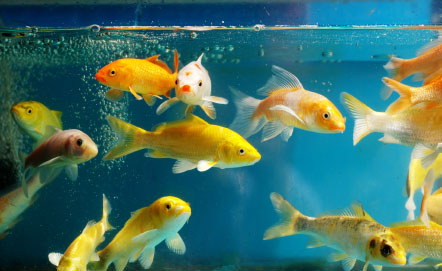 Save some water for the fish interfaithfamily for What do i need for a fish tank