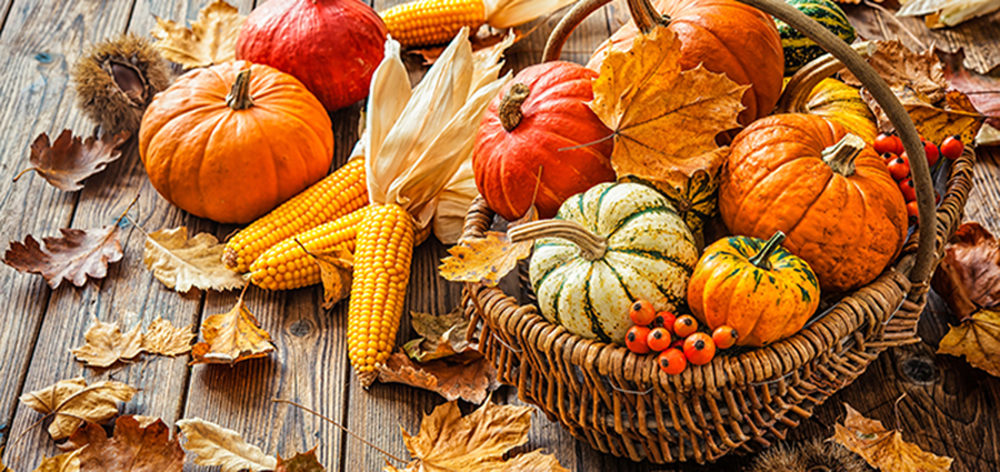 Thanksgiving and Sukkot's connection