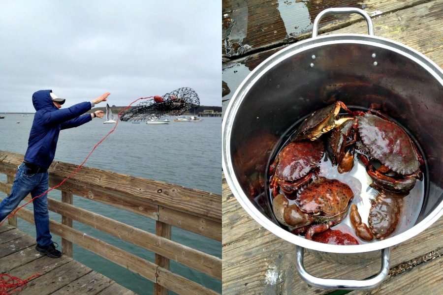 Going crabbing for Christmas